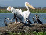 Lake Naivasha holiday packages