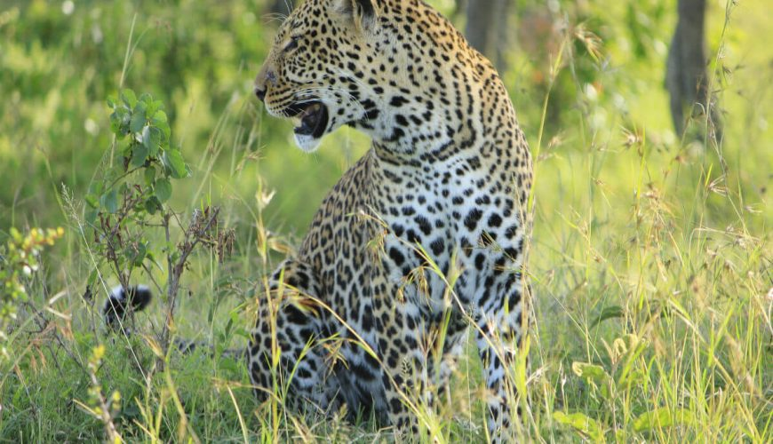 Masai mara africa