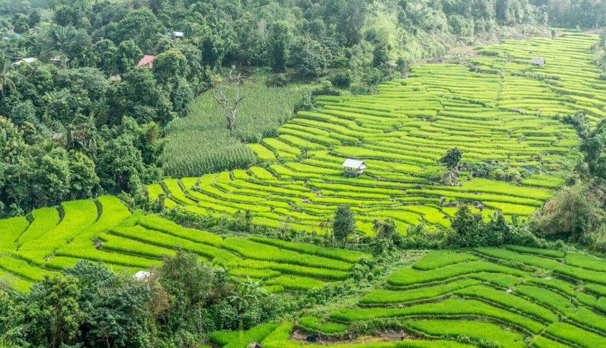 Rice Terraces Thailand
